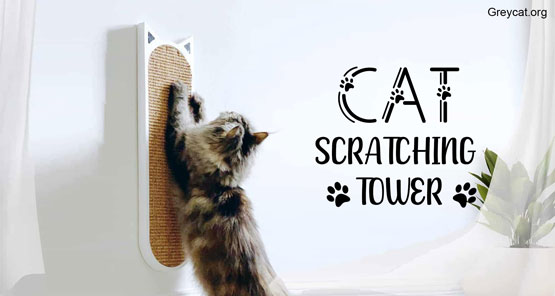 cat scratching towers